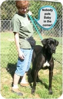 Great Dane Mix Dog for adoption in Ozark, Alabama - Baby