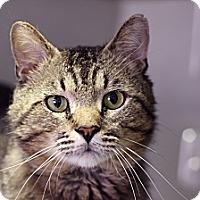 Adopt A Pet :: Mr. Mariachi - Chicago, IL