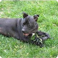 Adopt A Pet :: Baby Hope - Warren, NJ