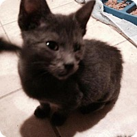 Adopt A Pet :: Griswald - East Hanover, NJ