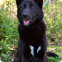 Adopt A Pet :: *Darcy - PENDING - Westport, CT