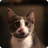 Adopt A Pet :: Yang - Richmond, VA