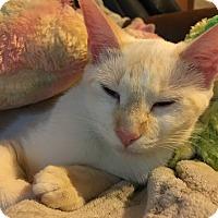 Adopt A Pet :: Buttermilk - DeRidder, LA