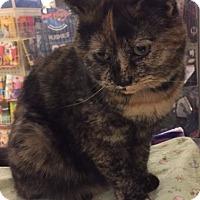 Adopt A Pet :: Emmi-Loo - Manchester, CT