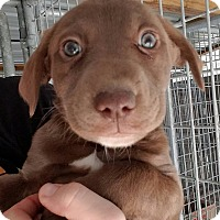 Adopt A Pet :: Athena - Gainesville, FL