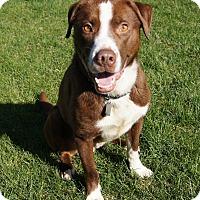 Adopt A Pet :: Rusty - AUR, IL