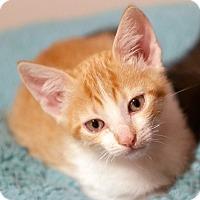 Adopt A Pet :: Max - N. Billerica, MA