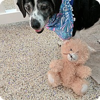 Adopt A Pet :: Danica - Thousand Oaks, CA