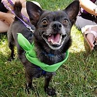 Adopt A Pet :: Drex - Aurora, OH