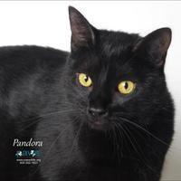 Adopt A Pet :: Pandora - Belle Chasse, LA