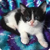 Adopt A Pet :: Hailey - Zolfo Springs, FL