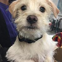 Adopt A Pet :: Packer - Santa Clarita, CA