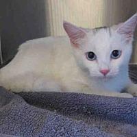 Adopt A Pet :: BLUE - Norco, CA
