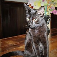 Adopt A Pet :: Ramona - Sherman Oaks, CA
