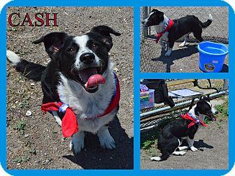 Corgi Mix Dog for adoption in Corpus Christi, Texas - Cash