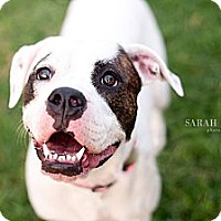 Adopt A Pet :: Chello - Reisterstown, MD