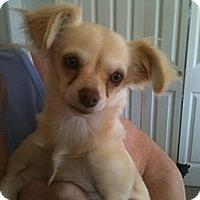 Adopt A Pet :: Twinkie - Russellville, AR