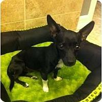 Adopt A Pet :: Markie - Oceanside, CA