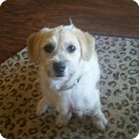 Adopt A Pet :: JoJo - Tucson, AZ