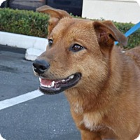 Adopt A Pet :: Russell - Santa Monica, CA