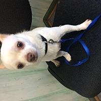 Adopt A Pet :: Gibbs - S. Pasedena, FL