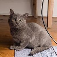 Adopt A Pet :: Scout - Lambertville, NJ