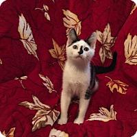 Adopt A Pet :: Gilligan - Colmar, PA