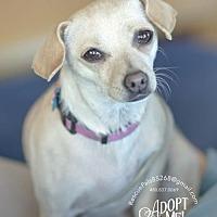 Adopt A Pet :: FAITH - Fountain Hills, AZ