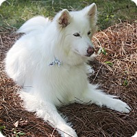 Adopt A Pet :: Jodi - Lincolnton, NC