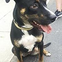 Adopt A Pet :: Bobbie - Manhasset, NY