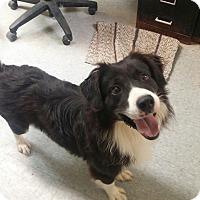 Adopt A Pet :: San - Paris, IL