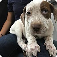 Adopt A Pet :: Ruby - Chico, CA