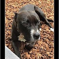 Adopt A Pet :: Buddy - Las Vegas, NV
