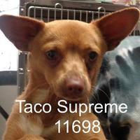 Adopt A Pet :: Taco Supreme - Manassas, VA