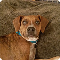 Adopt A Pet :: Max - Hagerstown, MD