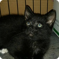 Adopt A Pet :: Cletis - Bethpage, NY