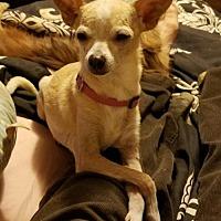Adopt A Pet :: Taco & Belle - Tonopah, AZ