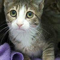 Adopt A Pet :: Cupcake, Cookie, Confetti - Montclair, NJ