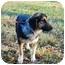 Photo 3 - Dachshund/German Shepherd Dog Mix Puppy for adoption in Bowie, Maryland - Casey