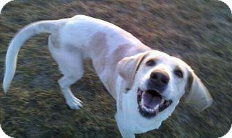 Treeing Walker Coonhound Mix Dog for adoption in Orange Lake, Florida - Sonny