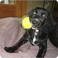 Adopt A Pet :: Peter - North Jackson, OH