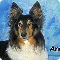 Adopt A Pet :: Andee - Ft. Myers, FL