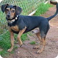 Adopt A Pet :: Icee - Athens, GA