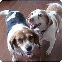 Adopt A Pet :: Molly & Max - Indianapolis, IN
