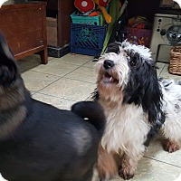 Adopt A Pet :: Harold - ADOPTION PENDING!! - Antioch, IL