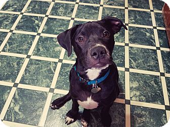 Labrador Retriever Mix Dog for adoption in FOSTER, Rhode Island - Spanky