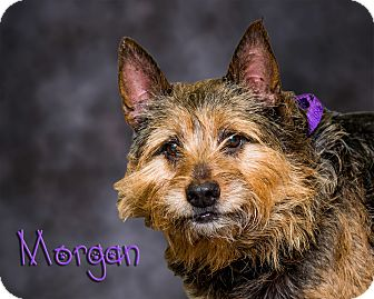 Terrier (Unknown Type, Medium) Mix Dog for adoption in Somerset, Pennsylvania - Morgan