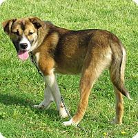 Adopt A Pet :: KEELY - Bedminster, NJ