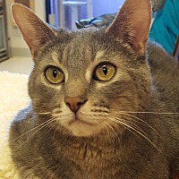 Adopt A Pet :: Slate - Grayslake, IL