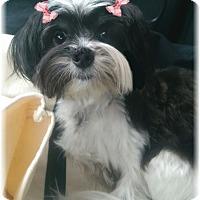 Adopt A Pet :: Kava - Palm City, FL